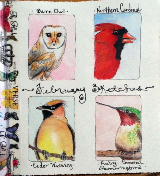 Birdy Portraits!
