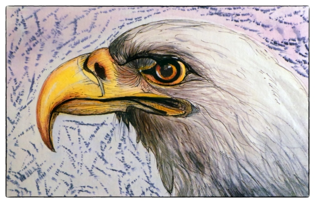 Bald eagle portrait from my Moleskine. Done in ink and watercolor.