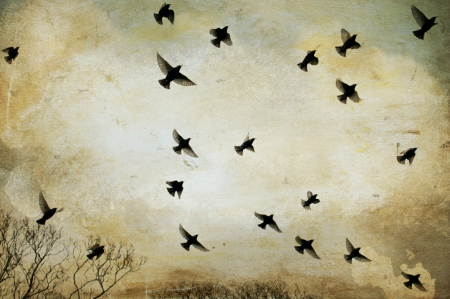 Flight of the Starlings