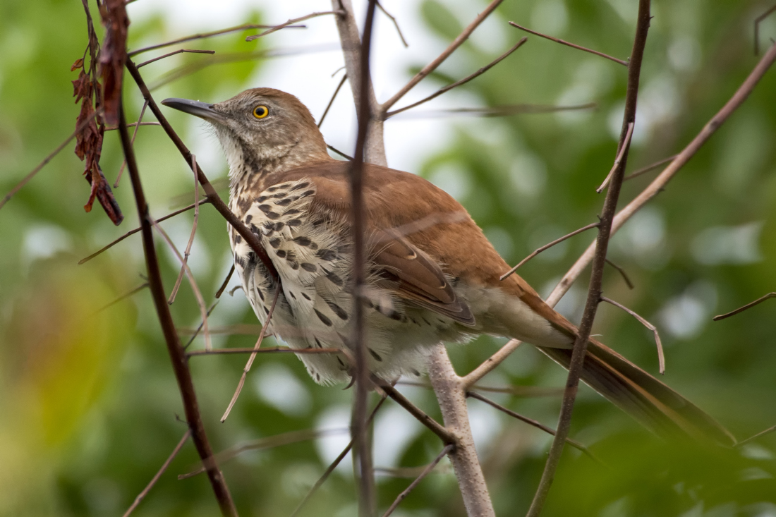 backyard birding september birder